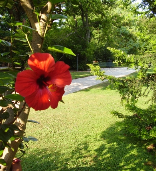 visita guidata giardino botanico lucca